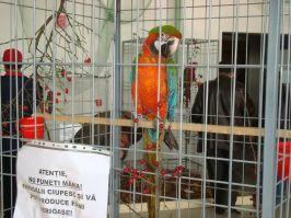 Cînd vine vorba de profit, Mariano se bazează pe papagali
