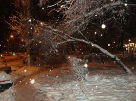 Copacii s-au gheboșit de la atîta zăpadă