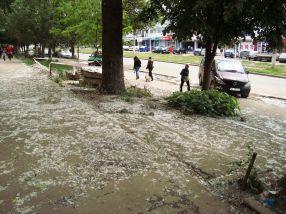 Covoare persane din puful de la plopi, pe străzile Galațiului