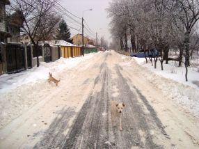Pe str. Arcașilor se vede deja asfaltul, atît de bine au bărbierit zăpada utilajele primăriei