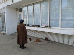 Încă o babă din Galați care crește și hrănește pisici în fața blocului