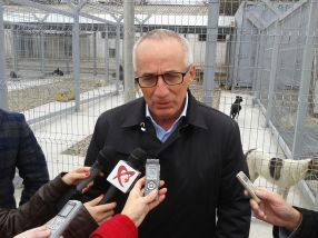Primarul Marius Stan liberalizează prețul maidanezilor din Galați