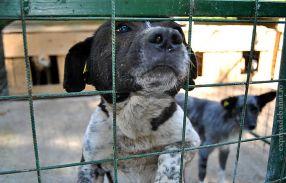 Cîinii care nu vor fi adoptați, vor fi eutanasiați!