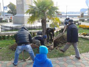 Muncitorii de la Gospodărire Urbană au legat palmierii cu furtunuri de pompieri