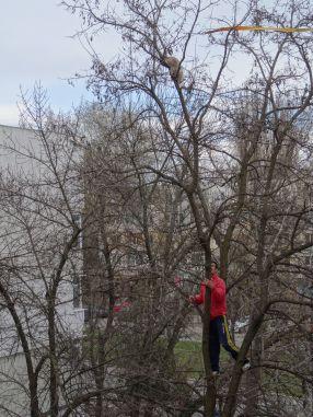 Un tînăr a urcat în copac, încercînd să ajungă cît mai aproape de pisică