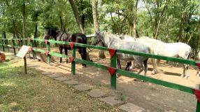 Niște cai periculoși