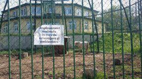 La Zoo Galați, dobitoacele din cuști au fost încurcate de dobitoacele din libertate