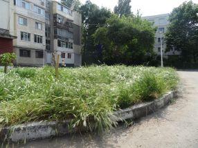 Vegetația crește și iar crește, căci nesimțiții de la Gospodărire Urbană au alte priorități