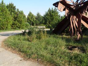 Boscheți cît casa și atmosferă de părăseală în Parcul Cloșca