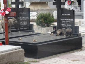 În Cimitirul Eternitatea, maidanezii îsi fac siesta pe cavourile de lux