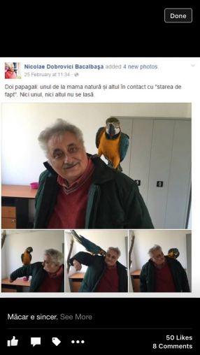 Recunoaste-ti papagalul din imagine
