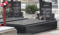 În Cimitirul Eternitatea, maidanezii își fac siesta pe cavourile de lux (foto)
