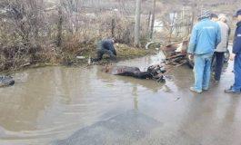Un cal amărît a căzut într-o groapă plină cu apă. Niște boi cu funcții nu au pățit nimic pentru că nu au ieșit din birouri