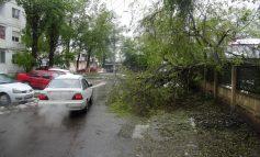 Copacii zac de 10 ore pe carosabil. Gospodărire Urbană taie frunză la cîini (foto)