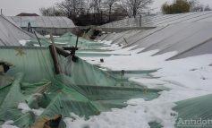 Se vor scumpi legumele! Solariile mătcașilor au fost distruse de zăpadă și de stîlpii doborîți de vînt