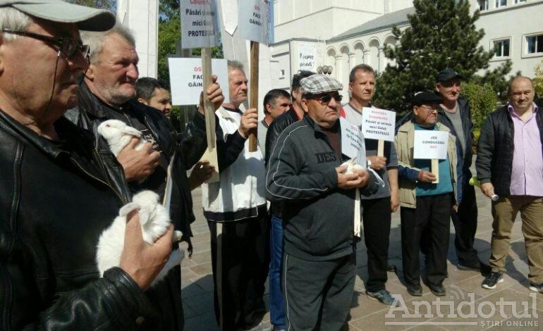 Protest de tip struțo-cămilă la Galați: crescătorii de păsări au adus iepuri în fața Prefecturii