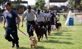 Crește coeficientul de inteligență de la Poliția Locală: instituția va avea o brigadă canină