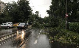 UPDATE: O furtună (de vară), de 15 minute, a pus la pămînt zeci de copaci