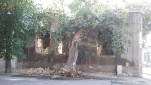 Copac prăbușit peste o casă