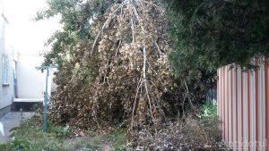 Copac căzut de la furtună