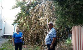 Societatea NeGospodărire Urbană a uitat să ridice de pe domeniul public o pădure de copaci căzuți la ultima furtună
