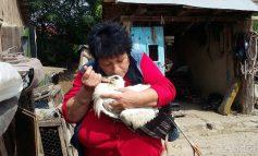 Galerie foto/A venit barza la o femeie din Tecuci. La propriu!