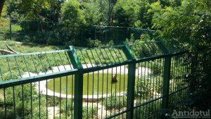 Măsuri anticaniculă la Zoo