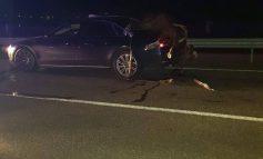 Digul este blocat în urma unui accident. Un cal a ajuns în portbagajul unui A8