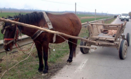 VIDEO/Nişte boi au chinuit cîţiva cai: Poliţia anchetează un caz de rele tratamente aplicate animalelor