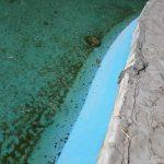 Bazine de apă, pline cu mormoloci