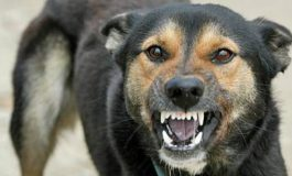 Copilul mușcat de câine în curtea spitalului din Tg.Bujor va primi despăgubiri. În premieră națională, despăgubiri vor primi și părinții