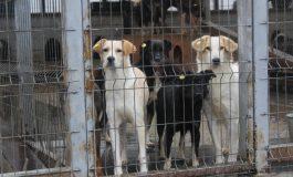 Câinii maidanezi, uşor de iubit când sunt pe stradă. Cererile de sterilizare gratuită, aproape inexistente