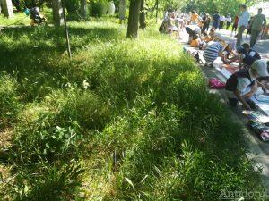 Faleza Dunării, invadată de bălării