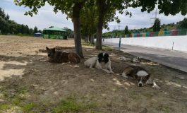În mijlocul verii, plaja Dunărea este plină. Plină de câini!