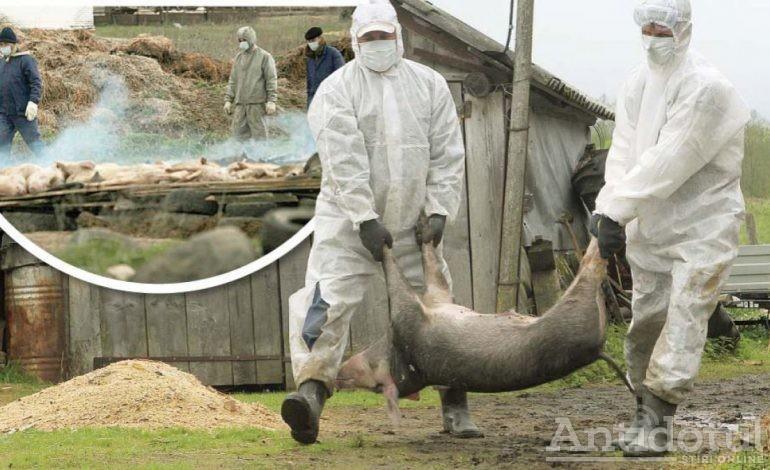 Fantoma pestei bântuie o comună gălățeană: cinci porci mistreți au fost găsiți morți lângă o localitate în care au fost eutanasiate toate suinele
