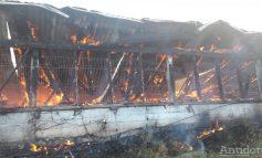 """Fostul proprietar al fermei de la Tichilești, care a ars parțial în urma unui incendiu: """"Cred că este vorba despre o mână criminală"""""""