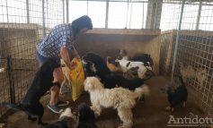 Primarul din Târgu Bujor s-a săturat de câinii maidanezi