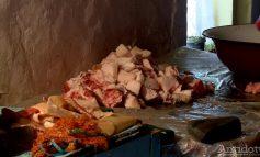 Locuitorii unui sat din judeţul Galaţi au tăiat porcii de pomană. Asta din cauza unei alarme false privind pesta porcină