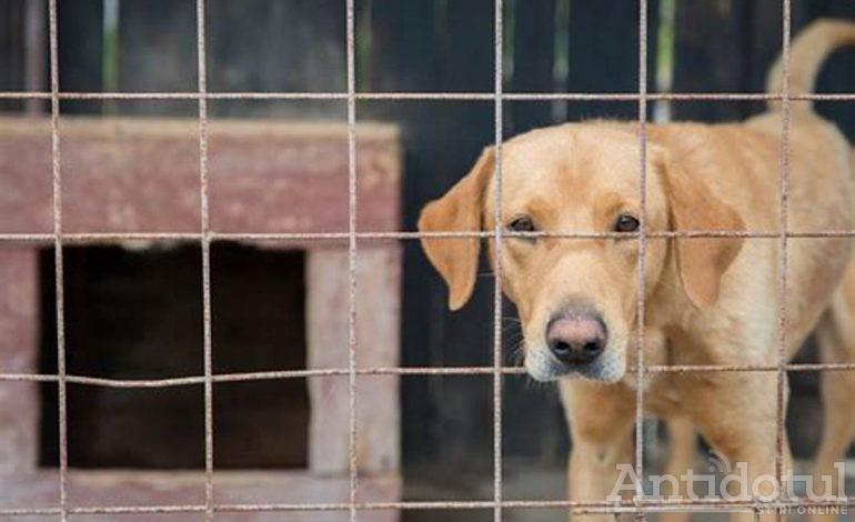 Cruzime fără margini. Un câine din padocul Tecuci, lăsat într-o baltă de sânge!