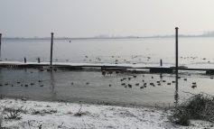 Ca la noi, la nimeni: gălățenii au tras cu pușca în rațele sălbatice care iernează pe malul Dunării