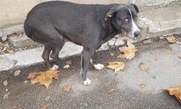 Strigătul iubitorilor de animale. Sute de câini, dispăruți după artificiile de revelion!
