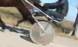 """VIDEO De ce sunt legaţi caii cu lanţuri şi târâţi kilometri întregi după maşini. """"Fac pariuri şi îi antrenează pentru curse"""""""