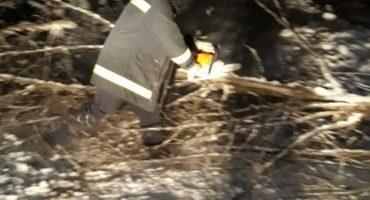 Copaci căzuţi pe drumuri în Teleorman din pricina vântului puternic