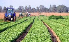 Criza scoate pe internet producătorii agricoli