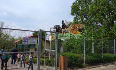 FOTO/ Grădina zoologică din Galați, luată cu asalt. De Paște, gălățenii au făcut coloane prin fața animalelor cazate la Gârboavele