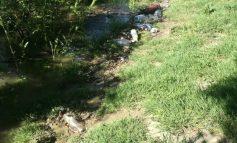 Videoreportaj/ Boschetele și gunoaiele au invadat Faleza Dunării