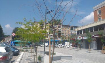 Galerie foto/Copacii plantați în centrul orașului Galați se usucă. Gălățenii ar putea rămâne cu betoane și boschete