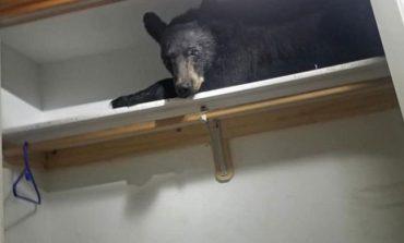 Blănosul din dulap: un urs somnoros a adormit în cămara unei locuinţe VIDEO