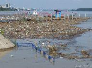 VIDEO/Imagini horror pe Dunăre: zeci de cadavre de animale plutesc pe lângă malul gălățean