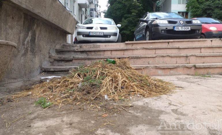 Movila de iarbă cea de toate zilele. Angajații Primăriei nu au reușit să adune gunoiul din mijlocul orașului Galați